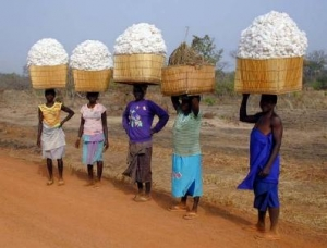 Burkina Faso Cotton pickers