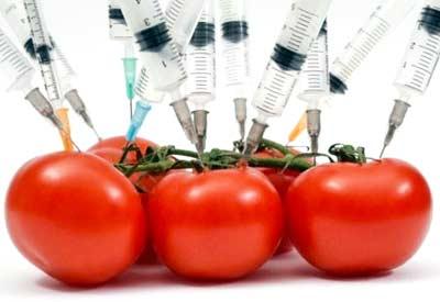 Flavr-Savr Tomatoes